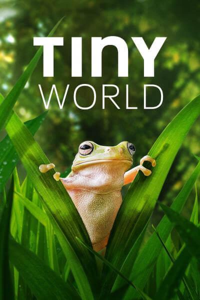 tiny-world-season-2-2021-ซับไทย
